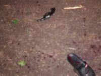 Tras asalto a servicentro muere un delincuente, otro queda herido y los demás huyen