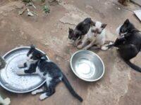 Los gatos de la SPAV