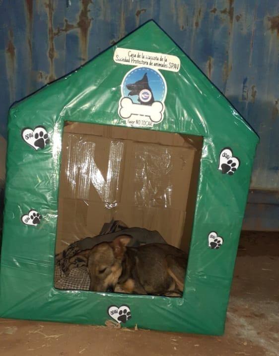 La Sociedad Protectora de Animales Villarrica/Paraguay (SPAVP) presenta las «MANSIONES PARA LOS CALLEJEROS».