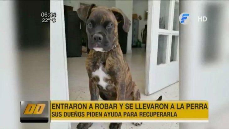 Delincuentes entraron a robar una casa y se llevaron a la mascota familiar
